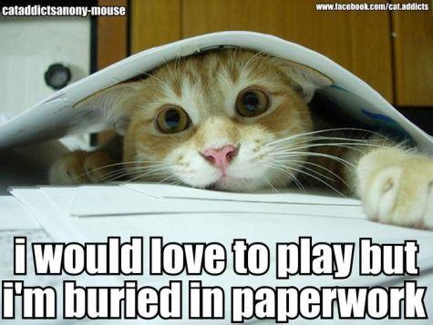 lolcat-paperwork